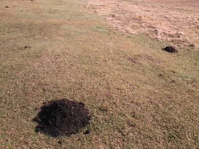 庭に穴が空いて見た目が悪くなる被害