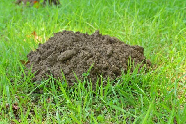 モグラの穴の特徴