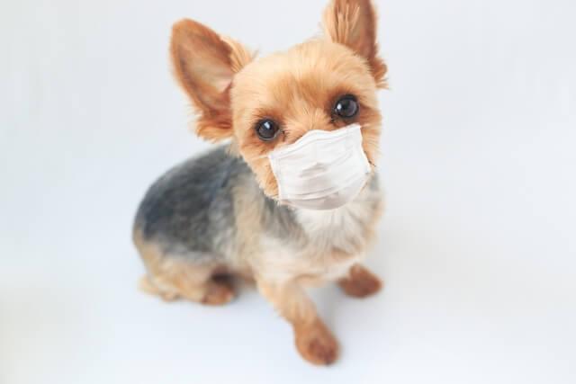 人だけでなく犬や猫などにも感染する疥癬症(かいせんしょう)という病気