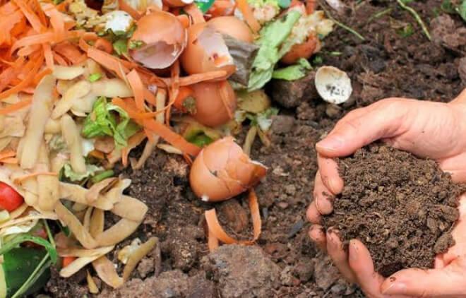 イノシシの餌になる生ごみや野菜を掃除する