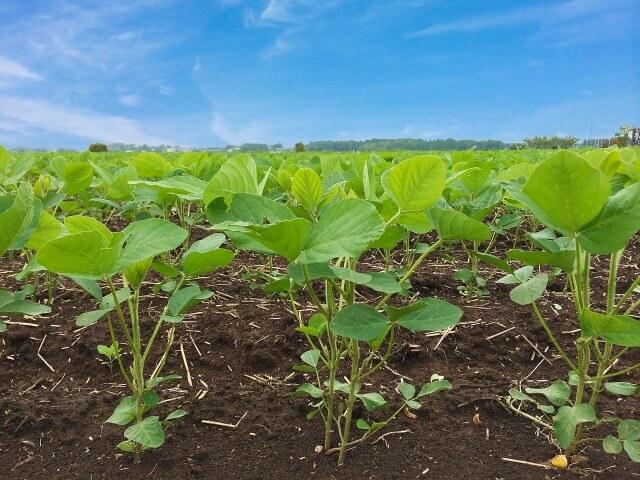 風船ガムのモグラ退治効果|現代農業でも紹介