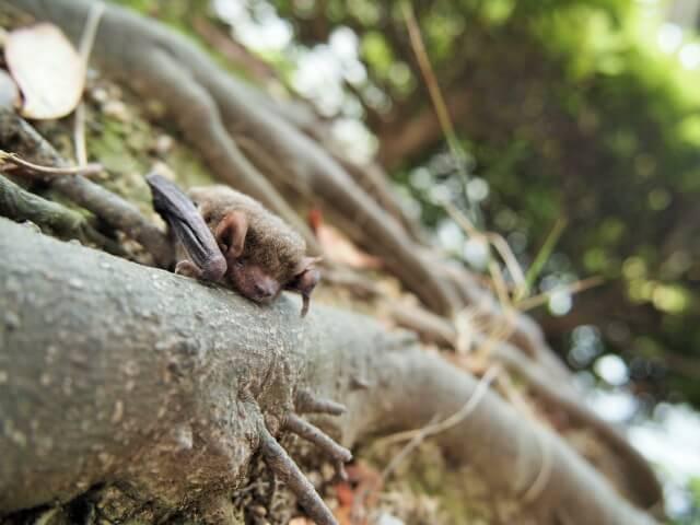 コウモリ駆除の前に生態の特徴を理解しておこう