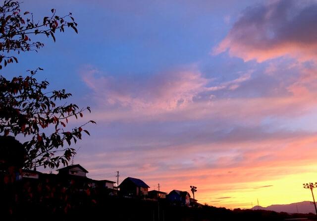 コウモリの駆除に適した時間帯は、活動時間の日没以降