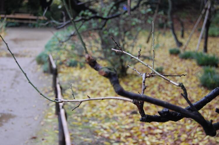屋根裏やベランダに届く木の枝を切る