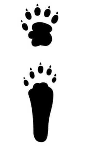 タヌキとハクビシンの足跡の違い