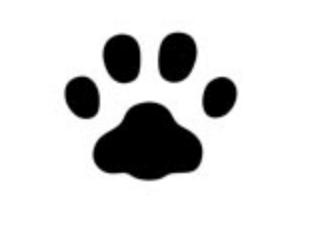 タヌキと猫の足跡の違い
