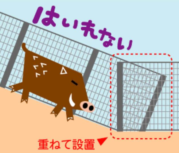 ④ワイヤーメッシュ柵を仮止めして地面との隙間をなくす