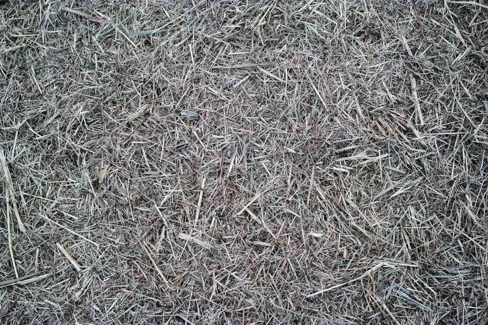 畑や庭周辺の雑草や藪を刈って、タヌキの隠れ場所をなくす