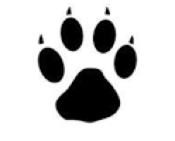 タヌキと犬の足跡の違い