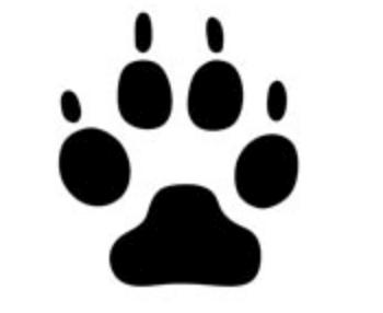 タヌキの足跡の特徴や大きさを写真や画像で解説
