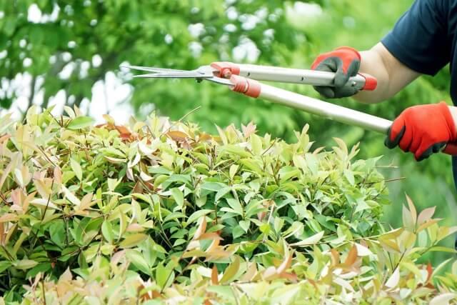 ハクビシンは忌避剤や木の剪定が有効