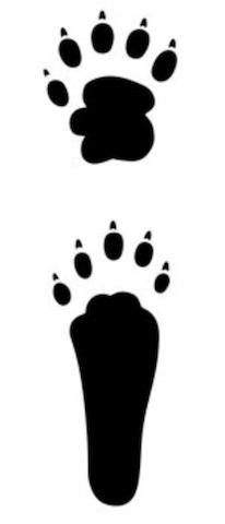ハクビシンの足跡は5本足