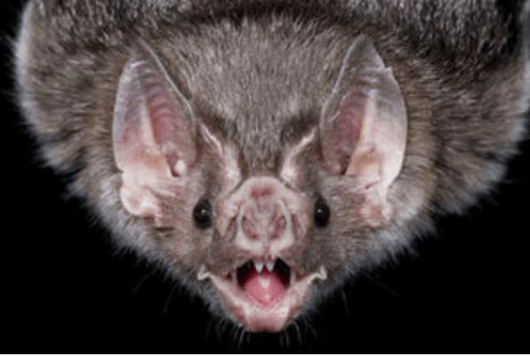 国によってはコウモリは縁起の悪い生き物と考えられている
