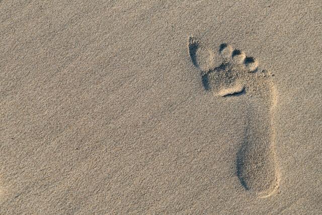 【タヌキの足跡の特徴】他の動物との違いを写真や画像付きで解説!