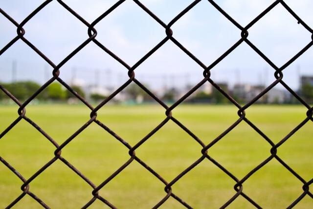 タヌキは忌避剤や金網、電気柵での撃退が有効