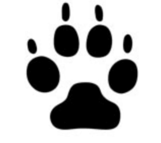 たぬきの足跡は4本指で小さく薄い