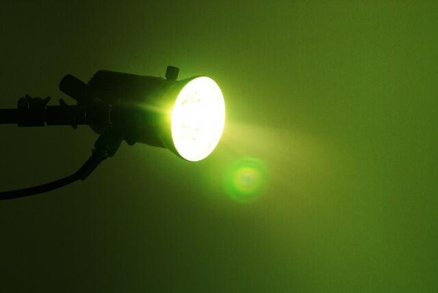 コウモリ対策にライトや明かりは効くの?