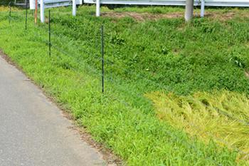 イノシシ対策に電気柵は効果あるの?