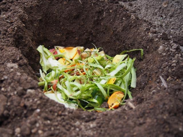 捕獲器の餌以外のタヌキを寄せ付ける果樹や野菜クズなどを掃除・管理する