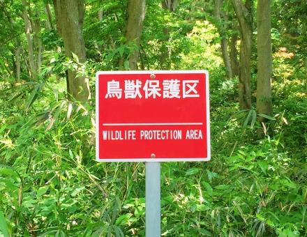 基本的にタヌキへの罠の使用は法律で禁止されている