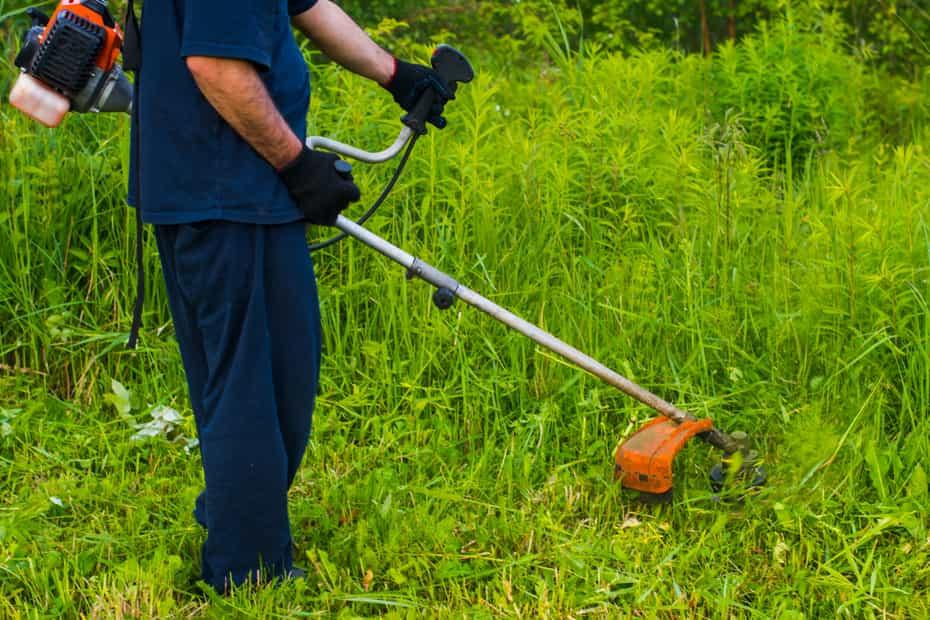 タヌキが隠れられる藪や茂みを刈り取る