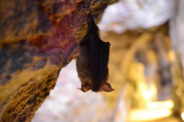 コウモリが屋根裏に住み付きやすい理由
